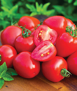 Tomato, Tomatoberry Garden Hybrid 1 Pkt. (10 seeds), Cherry Tomato Seeds, Currant Tomato Seeds, Grape Tomato Seeds, Cherry Tomato, Tomato Seeds