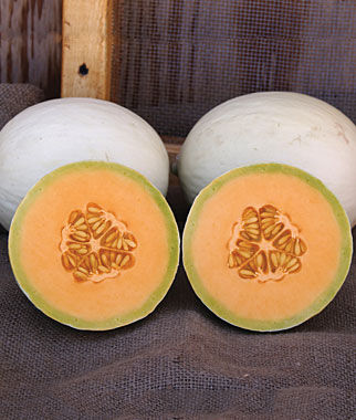 Melon, Honeydew, Arabian Breeze Hybrid, , large