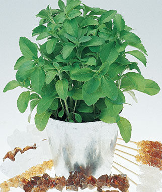 Stevia, Sweet Leaf, , large