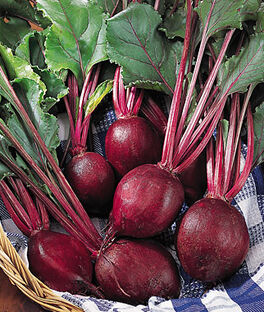 Beet, Detroit Supreme, , large