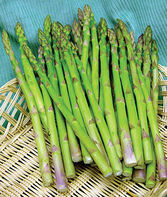 Asparagus, Jersey Giant, , large