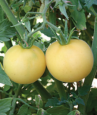 Garden Peach Organic Tomato Seeds and Plants Vegetable Seeds at