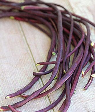 Bean, Red Podded Asparagus 1 Pkt. (2 oz.) Bean Seeds, Pole Beans, Bean - Pole, Vegetable Seeds, Garden Seeds, Seeds, Garden Supplies