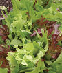 Mesclun, Green Party Mix, , large