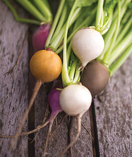 Radish Mix, Mardi Gras, , large