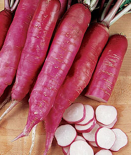 Radish, Salad Rose, , large