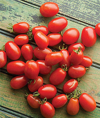 cherry roma tomato seeds and plants, vegetable gardening at burpee, Natural flower