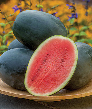 Watermelon, Little Darling Hybrid, , large