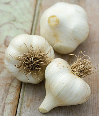 Garlic, Siciliano, , large