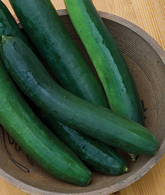 Sweet Success Hybrid Cucumber Seeds and Plants, Vegetable ...