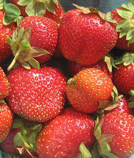 Strawberry, Camarosa, , large