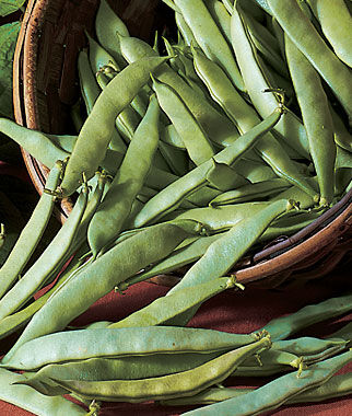 Roma Ii Bush Bean Seeds And Plants Vegetable Gardening At