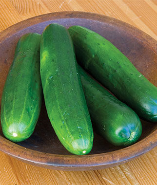 Cucumber, Burpless Beauty, , large