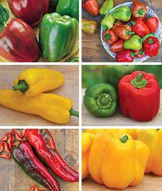 Favorite Sweet Pepper Collection 6 Plants Pepper Seeds, Sweet Pepper Seeds, Stuffing Peppers, Bell Peppers, Sweet Peppers, Bell Pepper Seeds