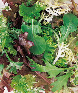 Mesclun, Spicy Mix, , large