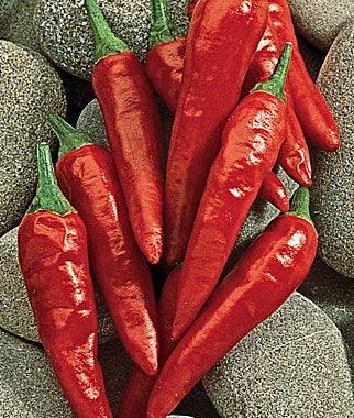 Pepper, Hot, Anaheim Chili, , large