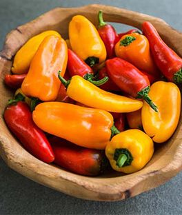 Sweet Pepper Collection, Yummy Hybrid, , large
