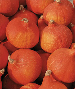 Squash, Red Kuri, , large