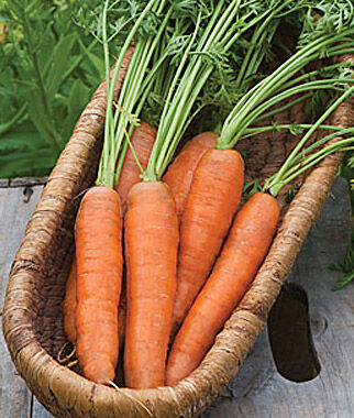 Carrot, Yaya Hybrid, , large
