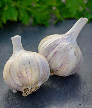 Garlic, German Red, , large