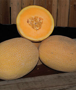 Melon, Ananas, Coquette Hybrid, , large