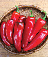 Pepper, Hot, Born to be Mild Hybrid, , large