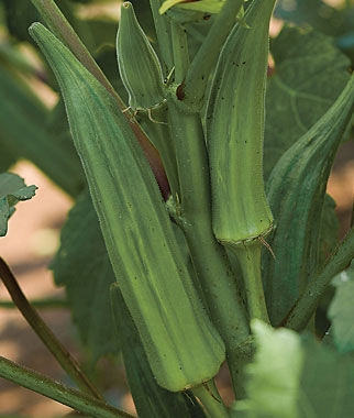 Okra, Clemson Spineless, , large