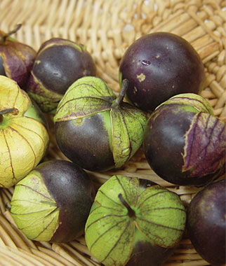 Tomatillo, Purple Organic, , large