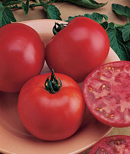 Tomato, Bush Big Boy Hybrid, , large