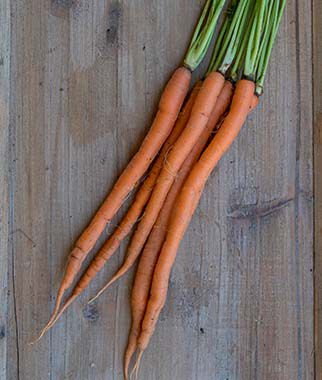 Carrot, Purplesnax Hybrid, , large