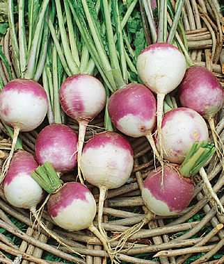 Turnip, Purple Top White Globe Organic, , large