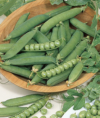 Pea, Burpeeana Early, , large