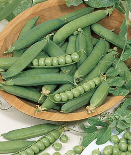 Pea, Burpeanna Early Organic, , large