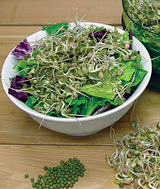 Sprout Seed, Mung Bean, , large