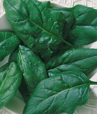 Spinach, Salad Fresh, , large