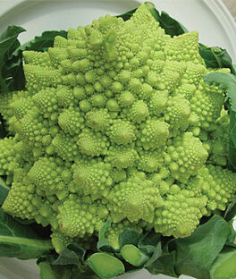 Broccoli, Romanesco, , large