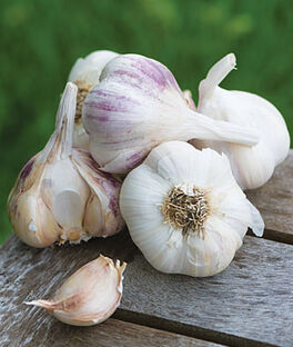 Garlic, Burpee's Best Spring Collection, , large