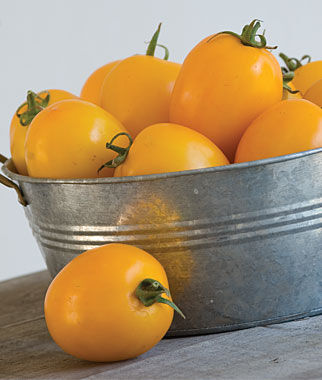 Tomato, Golden Mama Hybrid, , large