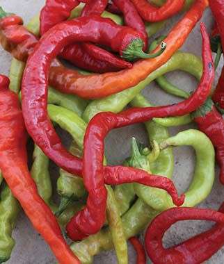 Pepper, Hot, Ristra Cayenne Hybrid, , large