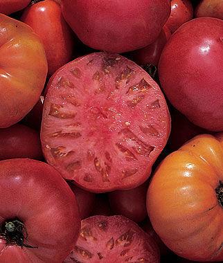 Tomato, Mortgage Lifter 1 Pkt. (100 seeds), Tomatoes, Tomato Seeds, Beefsteak Tomatoes, Slicing Tomatoes, Tomato Starts, Tomato Plants