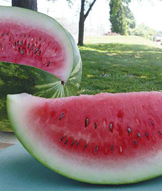 Watermelon, Congo, , large