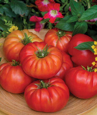 Tomato, Madame Marmande Hybrid 1 Pkt. (25 seeds), Tomatoes, Tomato Seeds, Beefsteak Tomatoes, Slicing Tomatoes, Tomato Starts, Tomato Plants