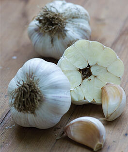 Garlic, Kettle River Giant, , large