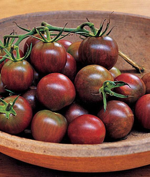 Tomato, Black Pearl Hybrid