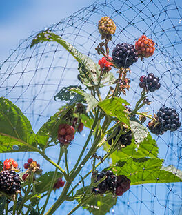 Bird-X Protectve Netting Fruits & Veg., , large