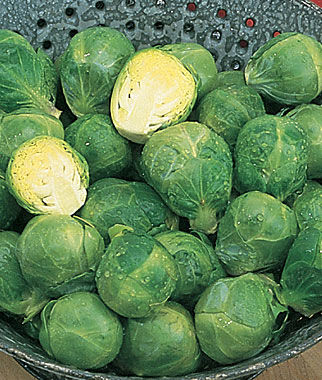 Brussels Sprouts, Long Island, , large