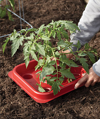 Tomato & Pepper Automator Trays, , large