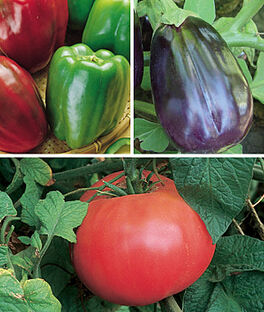 Heirloom Vegetable Plants Gift Collection, , large