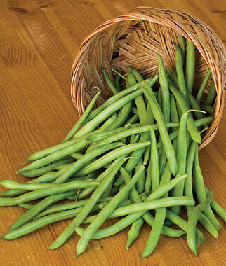 Bean, Bush, Provider Organic, , large