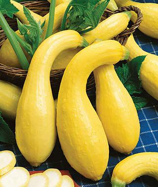 Squash, Early Summer Crookneck Organic, , large